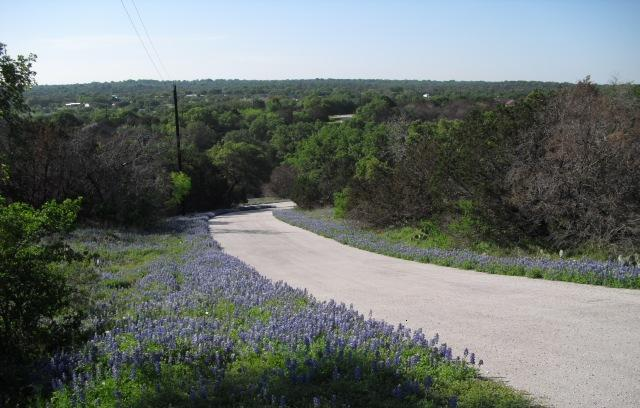 A dirt road with puple wild flowers on either side of the road