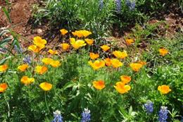 Orange and puple wild flowers with the sun shining on them